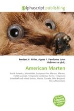 American Marten