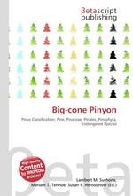 Big-cone Pinyon