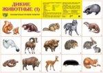 Дикие животные -1. Демонстрационные плакаты