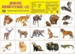 Дикие животные -2. Демонстрационные плакаты