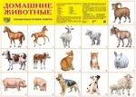 Домашние животные. Демонстрационные плакаты