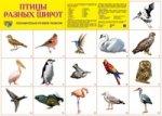 Демонстрационный плакат. Птицы разных широт