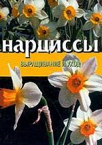 Нарциссы: выращивание и уход