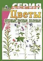 Цветы луговые, лесные, полевые. Демонстрационный материал