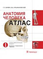 Анатомия человека. Атлас. В 3-х томах. Том 1. Опорно-двигательный аппарат. Остеология. Синдесмология. Миология