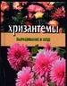 Хризантемы. Выращивание и уход