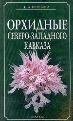 Орхидные Северо-Западного Кавказа