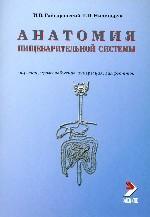 Анатомия пищеварительной системы. Строение, кровоснабжение, иннервация, лимфоотток: Учебное пособие