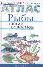 Рыбы наших водоемов