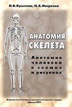 Анатомия скелета. Анатомия человека в схемах и рисунках. Атлас-пособие