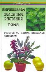 Выращиваем целебные растения дома: золотой ус, лимон, цикламен, эхинацея