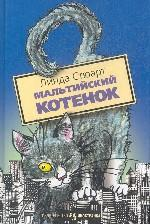 Мальтийский котенок