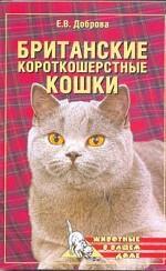 Британские котроткошерстые кошки