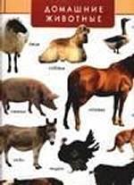 Домашние животные. Дикие животные