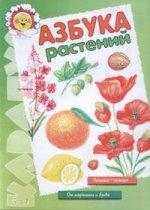 Азбука растений. Лыкова