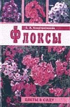 Флоксы. Цветы в саду