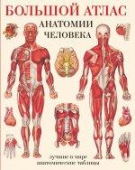 Большой атлас анатомии человека (обл)