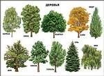"""Плакат """" Деревья"""""""