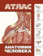 Атлас анатомии человека(инт.пер.)