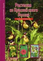 Растения из Красной книги России.Школьный путевод