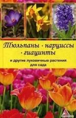 Тюльпаны, нарциссы, гиацинты и другие луковичные растения для сада
