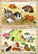 Домашние животные. Кролики. Хомяки. Плакат
