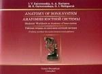 Анатомия костной системы.Рабочая тетрадь на англ.языке