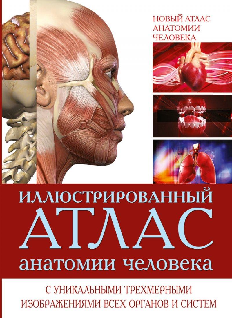 Скачать бесплатно книгу анатомия