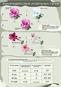 Взаимодействие аллельных генов. Плакат