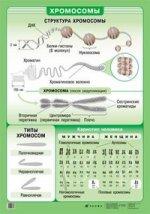 Наглядное пособие. Хромосомы
