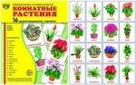 """Демонстр. картинки """"Комнатные растения""""(173х220мм)"""
