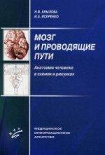 Мозг и проводящие пути. Анатомия человека в схемах и рисунках. Учебное пособие. Гриф УМО по медицинскому образованию