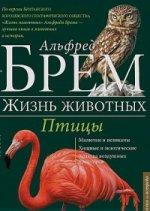 Птицы Л-Я