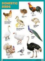 Domestic birds (Домашние птицы)