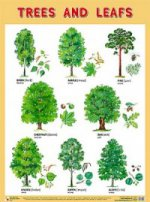 Trees and Leafs (Деревья и листья)