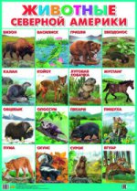 Плакат. Животные Северной Америки (550х770)