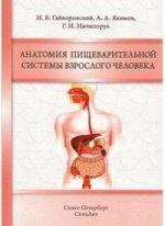 Анатомия пищеварительной системы взрослого челов
