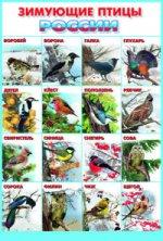 Зимующие птицы Росии