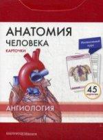 Анатомия человека.Ангиология.КАРТОЧКИ (45шт)