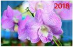 """""""Орхидея"""". Настенный трехблочный квартальный календарь на 2018 год с курсором в индивидуальной упаковке (Европакет)"""