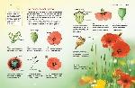 Цветы (Природа в деталях)