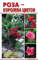 Роза - королева цветов