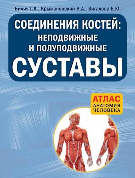 Соединения костей: неподвижные и полуподвижные суставы