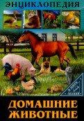 В мире знаний. Домашние животные
