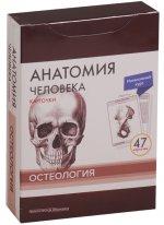 Анатомия человека. Карточки. Остеология. Интенсивный курс (47 карточек)