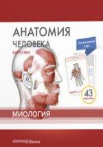 Анатомия человека.Миология.КАРТОЧКИ (43шт)