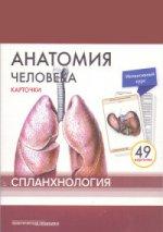 Анатомия человека.Спланхнология.КАРТОЧКИ (49шт)