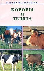 Коровы и телята. Разведение, выращивание