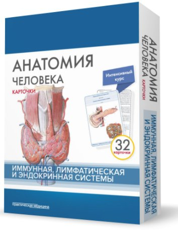 Анатомия человека. Карточки. Иммунная, лимфатическая и эндокринная системы