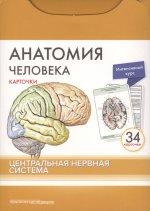 Анатомия человека.Центр.нервн.сист.КАРТОЧКИ (34шт)